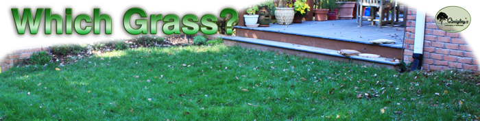 Nashville-Lawn-Care-Which-Grass for Brentwood, Franklin, Spring Hill, Nolensville, Smyrna, Murfreesboro TN.