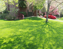 What is a lawn service? Brentwood TN Lawn Care