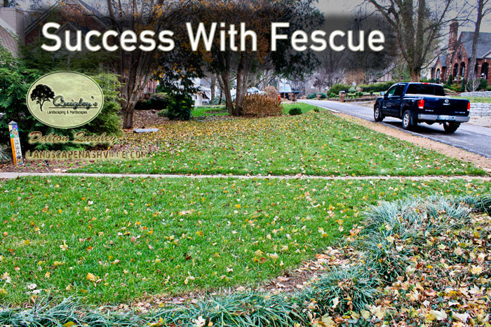 Success-with-fescue-nashville-brentwood-franklin-spring-hill-nolensville-tn